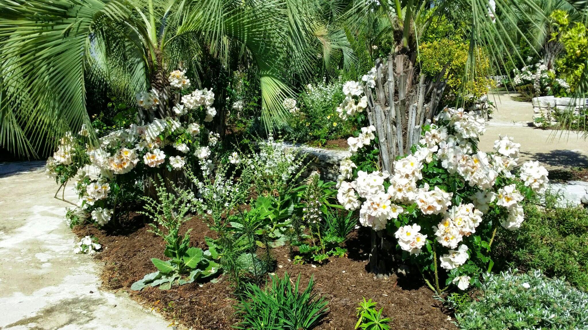 Quelques liens utiles for Entretien plantes jardin